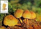 № 193 MC - Mushrooms (II) 1996