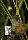 № 19 MC1 - Birds (I) 1992