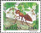 Liometopum Ant