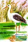 № 305 MC - Wading Bird