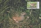 № 382 MC - Protected Fauna - Corncrake. World Wide Fund for Nature (WWF) 2001