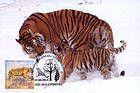 № 397 MC3 - Siberian Tiger