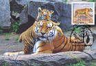 № 397 MC4 - Tigers