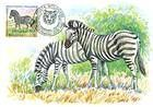 № 398 MC1 - Chapmans Zebra