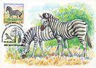 № 398 MC2 - Chapmans Zebra