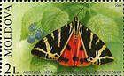 Jersey Tiger (Moth)