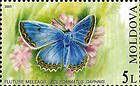 Meleagers Blue (Butterfly)