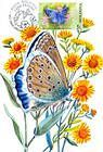 № 462 MC1 - Meleagers Blue (Butterfly)