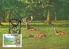 № 4 MC - Codrii Nature Reserve 1992