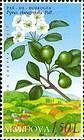 Oleaster-leaf Pear
