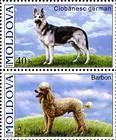 № 565+567Zd - Pedigree Dogs 2006