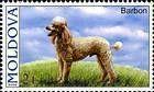 № 567 (2.00 Lei) Standard Poodle