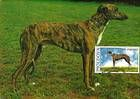 № 568 MC - Pedigree Dogs 2006