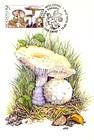 № 580 MC - From The Red Book of the Republic of Moldova: Edible Mushrooms (III) 2007