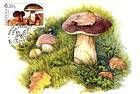 № 581 MC - From The Red Book of the Republic of Moldova: Edible Mushrooms (III) 2007