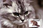 № 586 MC1 - Domestic Cats 2007