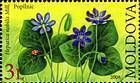 Anemone Hepatica (Hepatica Nobilis)