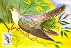 № 61 MC - Common Cuckoo
