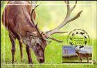 № 623 MC1 - Deer