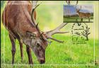 № 623 MC2 - Deer (Joint Issue Between Moldova and Kazakhstan) 2008