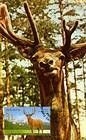 № 624 MC1 - Deer (Joint Issue Between Moldova and Kazakhstan) 2008