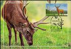 № 624 MC5 - Deer (Joint Issue Between Moldova and Kazakhstan) 2008