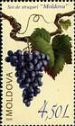 The «Moldova» Grape Variety