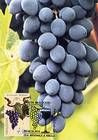 № 676 MC2 - The «Moldova» Grape Variety 2009