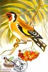 № 698 MC2 - European Goldfinch (Carduelis Carduelis)