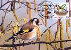 № 698 MC4 - Birds (III) 2010