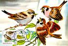 № 699 MC5 - Birds (III) 2010