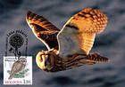 № 700 MC10 - Ural Owl (Strix Uralensis Pallas)