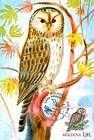 № 700 MC4 - Ural Owl (Strix Uralensis Pallas)