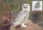 № 700 MC7 - Ural Owl (Strix Uralensis Pallas)
