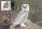 № 700 MC9 - Ural Owl (Strix Uralensis Pallas)