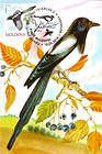 № 701 MC7 - Birds (III) 2010
