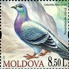 № 702 (8.50 Lei) Rock Dove (Columba Livia)