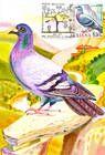 № 702 MC5 - Birds (III) 2010