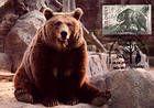 № 720 MC3 - Bear
