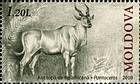 African Antelope (Pontoceros Ambiguus)