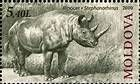 Rhinoceros (Stephanorhinus)