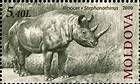 Rhinoceros (Stephanorhinus)