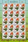 № 752 Kb - Tulip