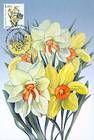 № 753 MC1 - Flowers 2011