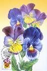 № 754 MC1 - Flowers 2011