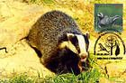 № 759 MC2 - European Badger (Meles meles)