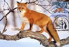 № 762 MC7 - Red Fox (Vulpes vulpes)