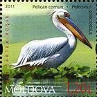 № 764 (1.20 Lei) Pelican (Pelecanus)