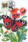 № 79 MC2 - Peacock Butterfly