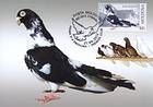 № 802 MC - Breeds of Pigeon 2012